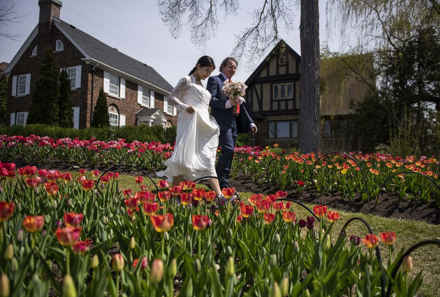 Cantiknya Warna Warni Bunga Tulip Yang Bermekaran Di Kanada Foto 5