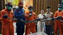 Ngeri! Ular Sanca 3,5 Meter Sembunyi di Bawah Keramik Rumah Warga di Jaktim