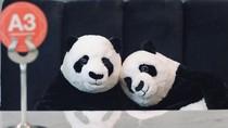 Cara Unik Resto di Thailand, Pelanggan Ditemani Panda