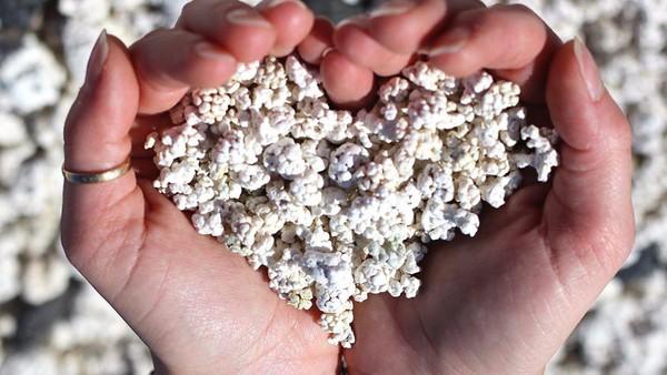 Para ahli memperkirakan, kalau sekitar 10 kilogram popcorn dicuri dari pantai itu setiap bulannya seperti diberitakan The Sun. Apabila ditotal, jumlahnya bisa mencapai 120 kilogram per tahun (Facebook)