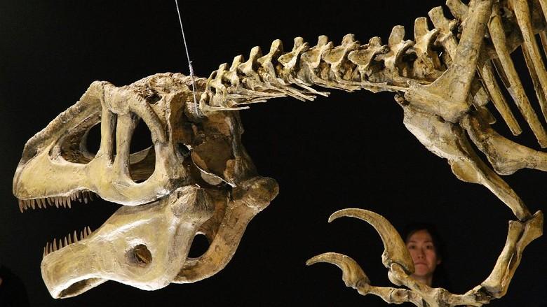 TOKYO - MARCH 13:  Megaraptor namunhuaiquii is displayed during the