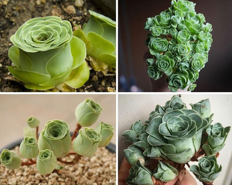 Deretan tanaman ini memiliki bentuk yang lucu dan menggemaskan, bahkan mirip mainan!