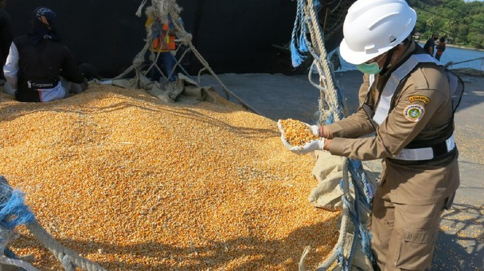 Sebanyak 13.500 ton Jagung  diekspor ke Filipina dari Pelabuhan Badas Kabupaten Sumbawa, Provinsi NTB disaksikan oleh  Wakil Bupati Sumbawa Drs.H Mahmud Abdullah.