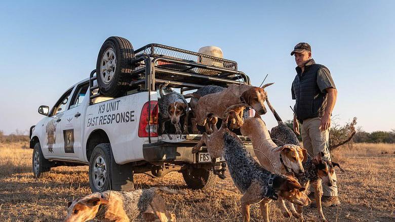 anjing pemburu di afrika selatan