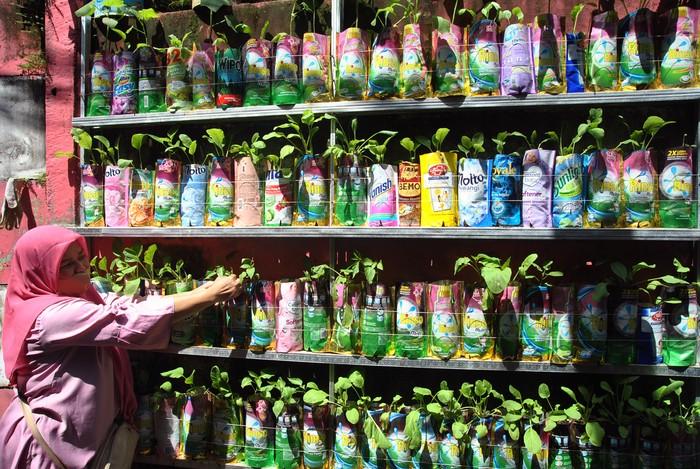 Warga Kelurahan Bondongan, Kota Bogor, mencanangkan Kampung Siaga Pangan COVID-19. Mereka secara swadaya menanam berbagai jenis sayuran dengan teknik urban farming.