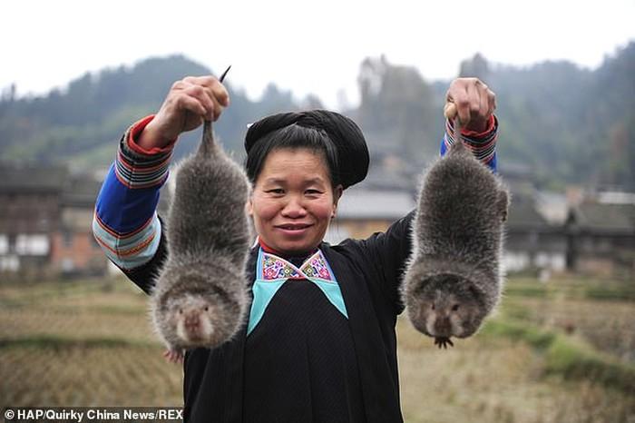 Peternakan Hewan Liar China