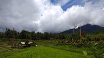 Rindu Hijaunya Persawahan Jatiluwih Tabanan Bali