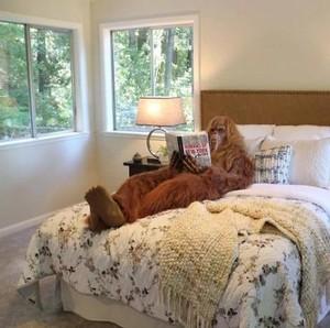 Unik, Iklan Penjualan Rumah yang Gunakan Bigfoot Sebagai Modelnya