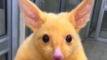 Foto: Pikachu di Dunia Nyata