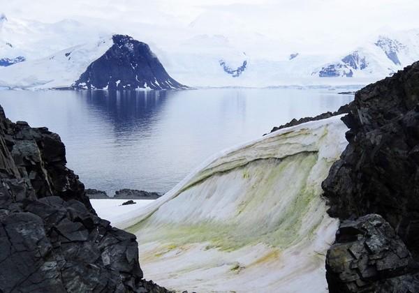 Fenomena ini dikarenakan oleh ganggang hijau yang tumbuh subur di lapisan es Antarktika. (AFP/Matt Davey)