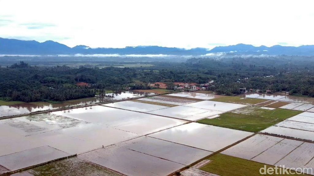 Puluhan Hektare Sawah Terendam Banjir, Petani Mateng Minta Irigasi