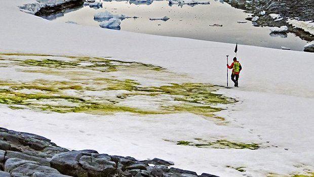Ganggang hijau di Antarktika
