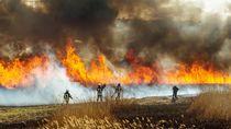 Video Kebakaran Hutan di Siberia Akibat Suhu Panas Esktrem