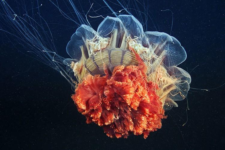 Makhluk Bawah Laut