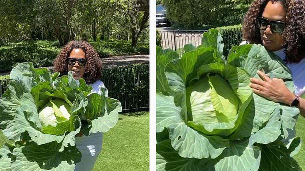 Keren! Oprah Winfrey Panen Kubis Jumbo di Kebun Miliknya