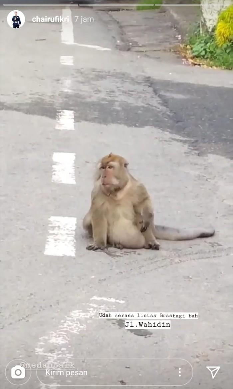 Monyet besar berkeliaran di Jalan Wahidin, Kota Medan (Instagram @chairuriza)