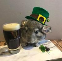 Walau terkesan rumit, Beverly sukses mencuri perhatian pengguna Facebook dan Instagram karena pose-pose hamster ini. (harcourt_hammies/Instagram)