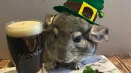 Foto: Ragam Parodi Manusia Saat Lockdown oleh Hamster