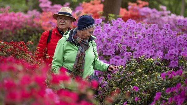 Bunga-bunga yang bermekaran sanggup membuat terapi jiwa menjadi lebih tenang dan positif.