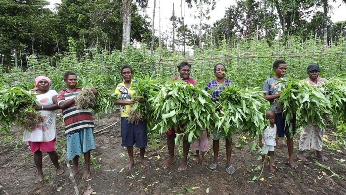Covid-19 Papua: Rawan kelaparan saat pandemi, warga berkebun massal