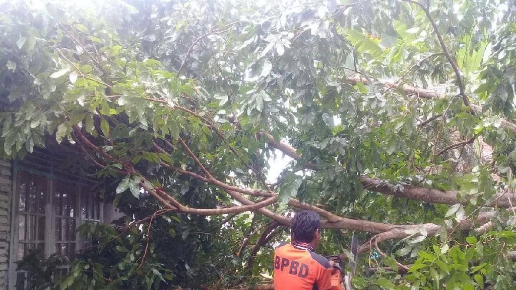 Diterjang Angin Kencang, Pohon Tumbang dan Timpa Rumah Warga di Agam Sumbar