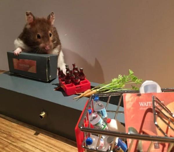 Hasil foto Max dan lulu yang terlihat menggemaskan membuat Beverly semangat untuk membuat ragam properti lulcu untuk hamster mereka. (harcourt_hammies/Instagram)