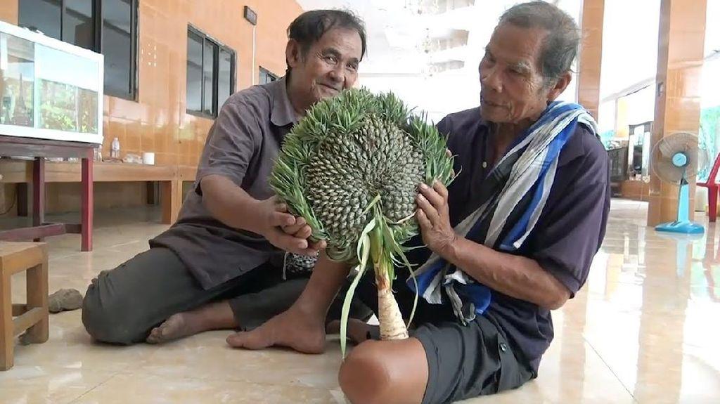 Bentuknya Aneh, Warga Thailand Sembah Buah Nanas Ini