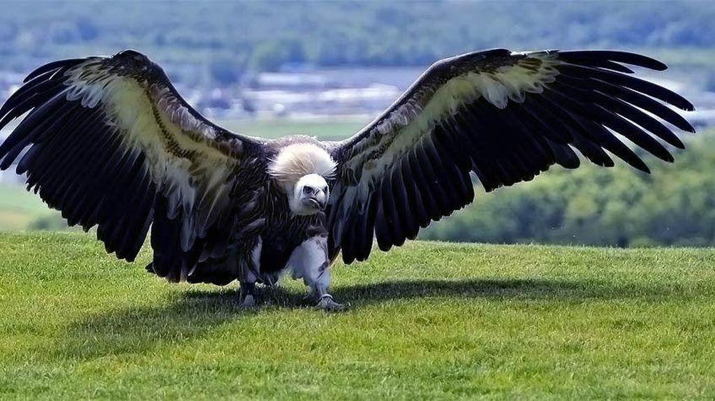 Fakta Burung Raksasa yang Pernah Menghuni Bumi