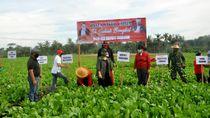 Borong Hasil Panen di Tengah Pandemi Demi Petani