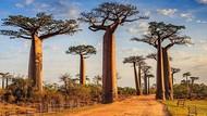 Madagaskar Buka Pintu Buat Wisatawan, tapi Cuma Separuh