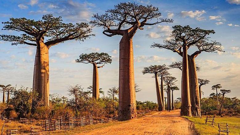 Madagaskar bisa dimasukkan ke dalam daftar tempat yang harus dikunjungi ketika masa pandemi selesai. Karena di negara ini banyak hal menarik di dalamnya.