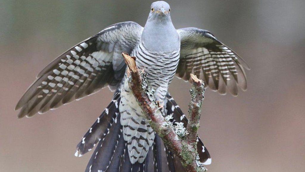 Burung Ini Terbang Sejauh 12.000 Km dan Lintasi 16 Negara, Ilmuwan Terpukau