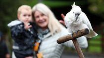 Kebun Binatang di Selandia Baru Kembali Dibuka untuk Umum