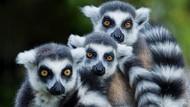 Ini 9 Alasan Madagaskar Jadi Destinasi Wisata Menarik di Dunia