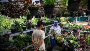 Geliat Penjual Tanaman Hias Panen Rezeki di Tengah Pandemi