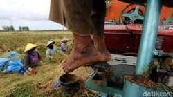 Upah Buruh Tani Naik 0,14% Jadi Rp 56.710 per Hari
