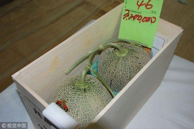 Melon Yubari tak lagi jadi buah termahan di Jepang