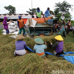 Pemerintah Diminta Beri Perhatian Ekstra ke Pertanian, Ini Alasannya