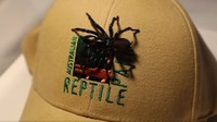 Laba-laba ini lazim ditemui di kawasan Australia, terutama di bagian timur. Laba-laba ini sangat beracun dan bisa menyebabkan kematian bagi manusia. (dok. The Australian Reptile Park)