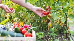 Sering Gagal Panen? 5 Kesalahan Menanam Sayuran Ini Harus Dihindari!