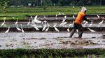 Terjaganya Habitat Burung Kuntul di Wonogiri