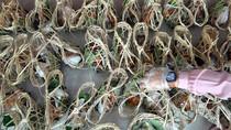 Kurangi Limbah Plastik, Bongsang Jadi Alternatif Bungkus Makanan