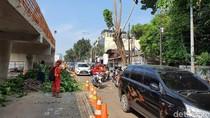 Dinas Kehutanan DKI Tebang Pohon Pagi Hari, Tj Barat Arah Ps Minggu Macet