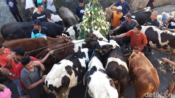 Tradisi arak-arakan sapi di Boyolali sambut Syawal 2019 lalu