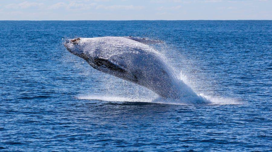 makhluk hidup terbesar bumi