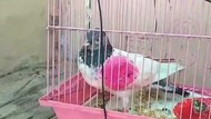 Warga Pakistan Minta PM India Kembalikan Burung Merpatinya yang Ditahan