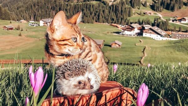 Ginus berharap, pengalaman bersama dua hewan peliharaannya dapat menghibur siapapun yang melihat mereka saat pandemi ini (mr.Pokee/Instagram)