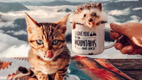 Mereka bahkan pernah sampai ke puncak gunung (mr.Pokee/Instagram)