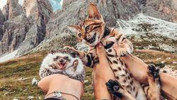 Ini Herbee dan Audree, Kucing dan Landak yang Suka Keliling Dunia