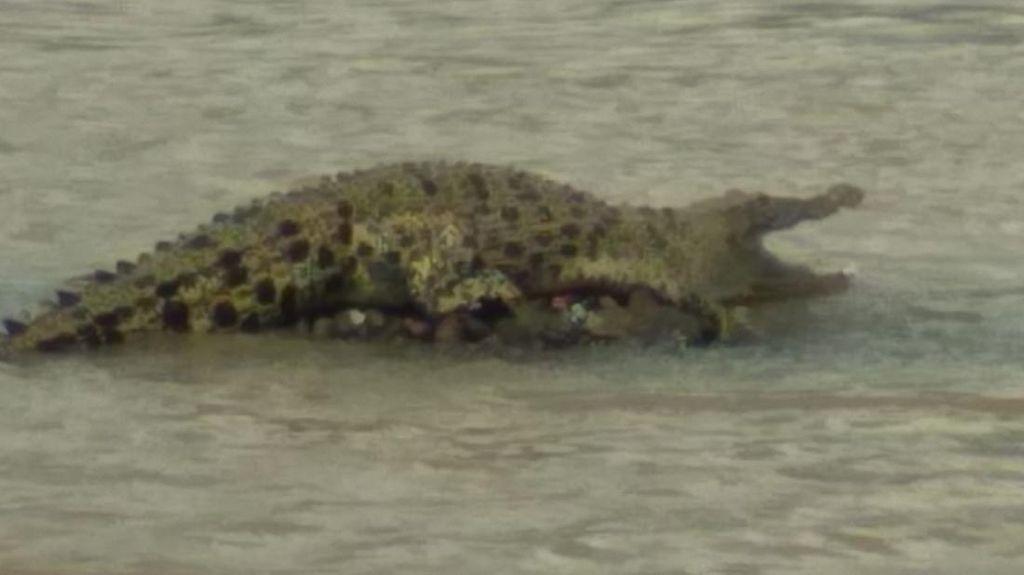 Buaya di Sungai Cimandiri Sukabumi yang Kagetkan Pemancing Tidak Pernah Meneror